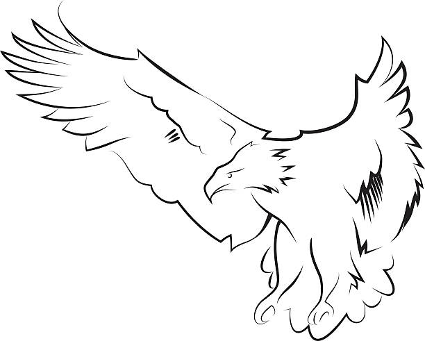 Eagle in the hunting position. Line art. vector art illustration