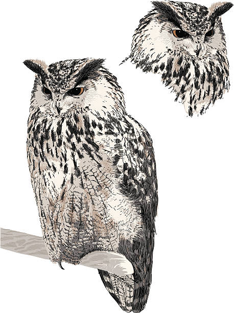 eagle owl - great horned owl stock illustrations, clip art, cartoons, & icons