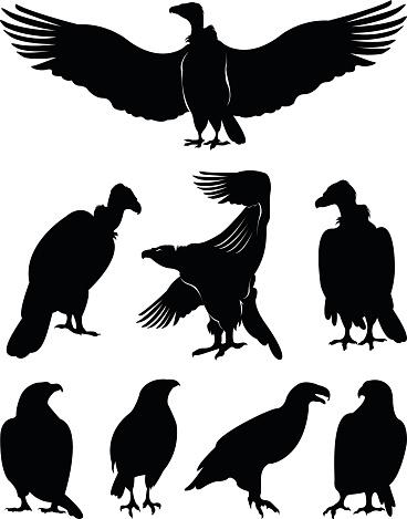 vector file of eagle silhouettes