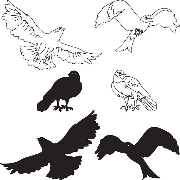 illustrations, cliparts, dessins animés et icônes de eagle - falconidés