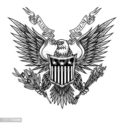 Vector illustration of bald eagle with shield, arrows and olive branch in engraving technique. Isolated on white.