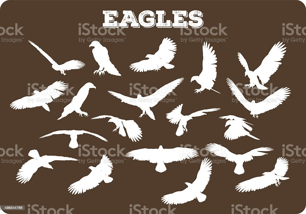 Eagles In Various Poses vector art illustration