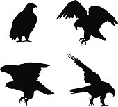 Eagles Vector Silhouette
