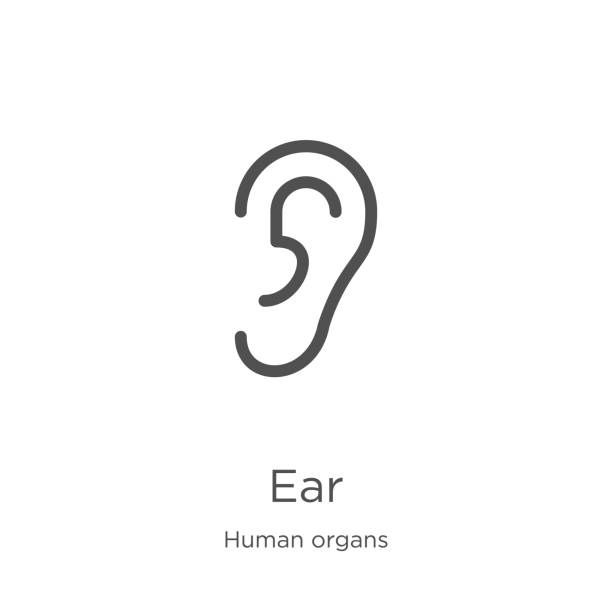 ear icon vector from human organs collection. Thin line ear outline icon vector illustration. Outline, thin line ear icon for website design and mobile, app development. ear icon. Element of human organs collection for mobile concept and web apps icon. Outline, thin line ear icon for website design and mobile, app development ear stock illustrations