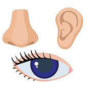 Ear, nose, eye. Vector illustration of human body parts