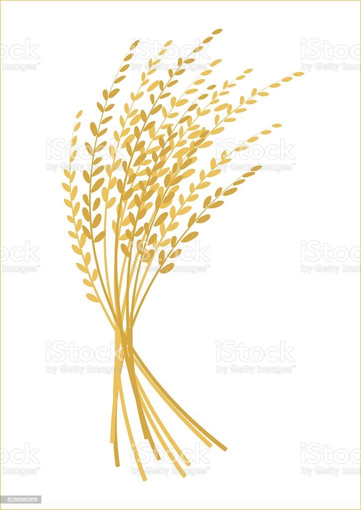 Ear Of Rice Design Plant Logo Vector Stock Vector Art ...