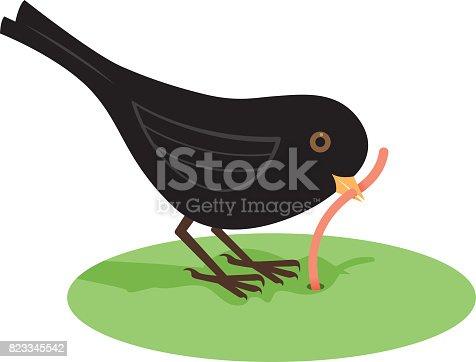 A blackbird eating a worm