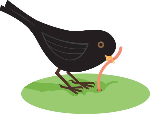 Early bird getting the worm vector art illustration