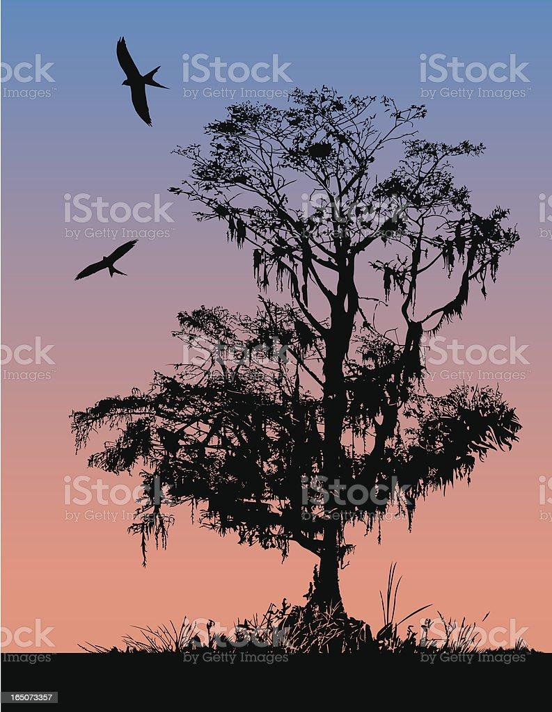 Manhã cedo Cypress - ilustração de arte em vetor