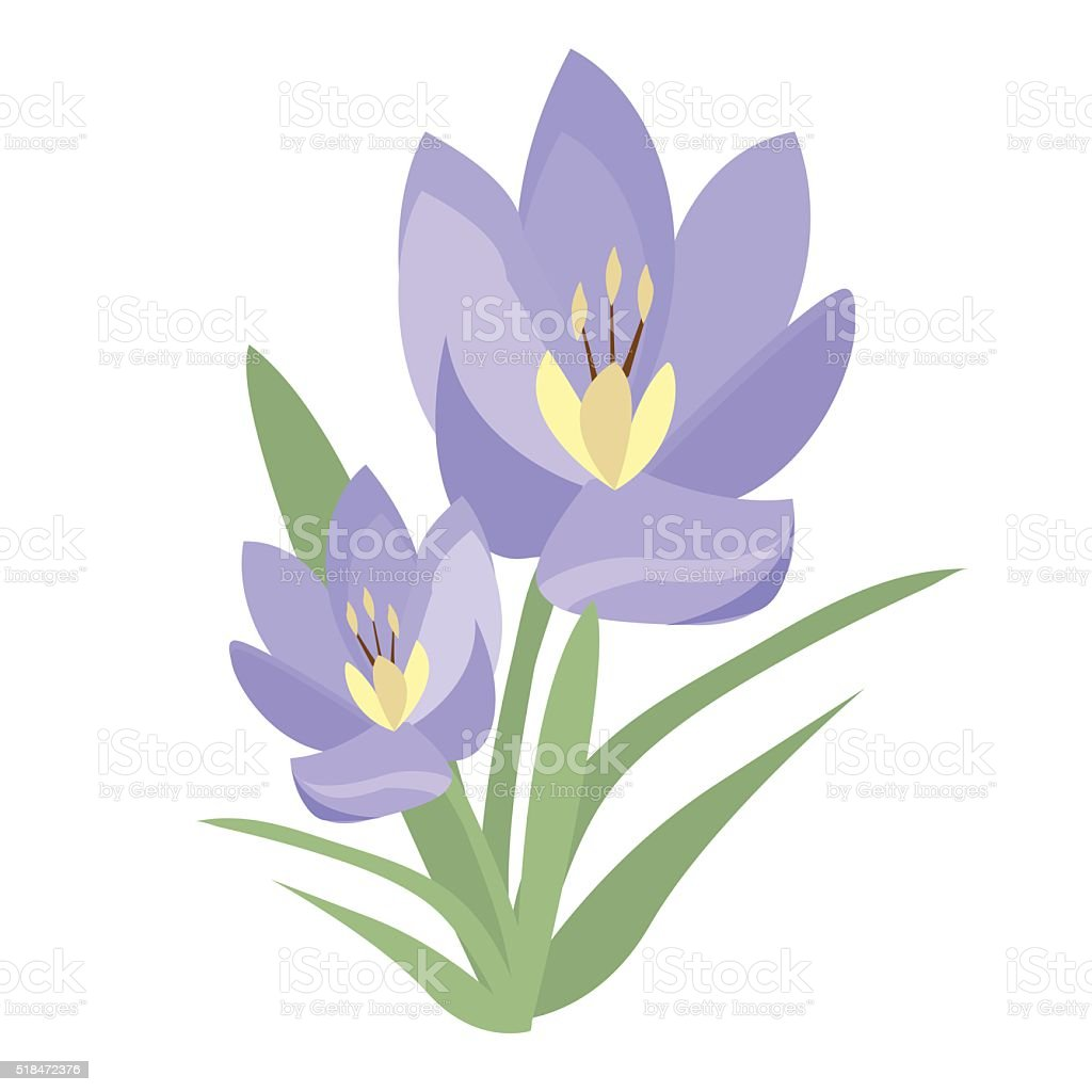 Early Spring Purple Crocus And Snowdrops Nature Beauty Flowers