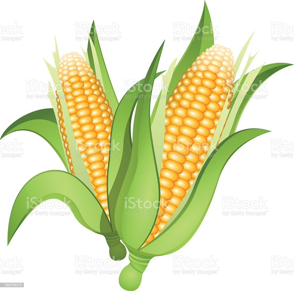 Ears of corn vector art illustration
