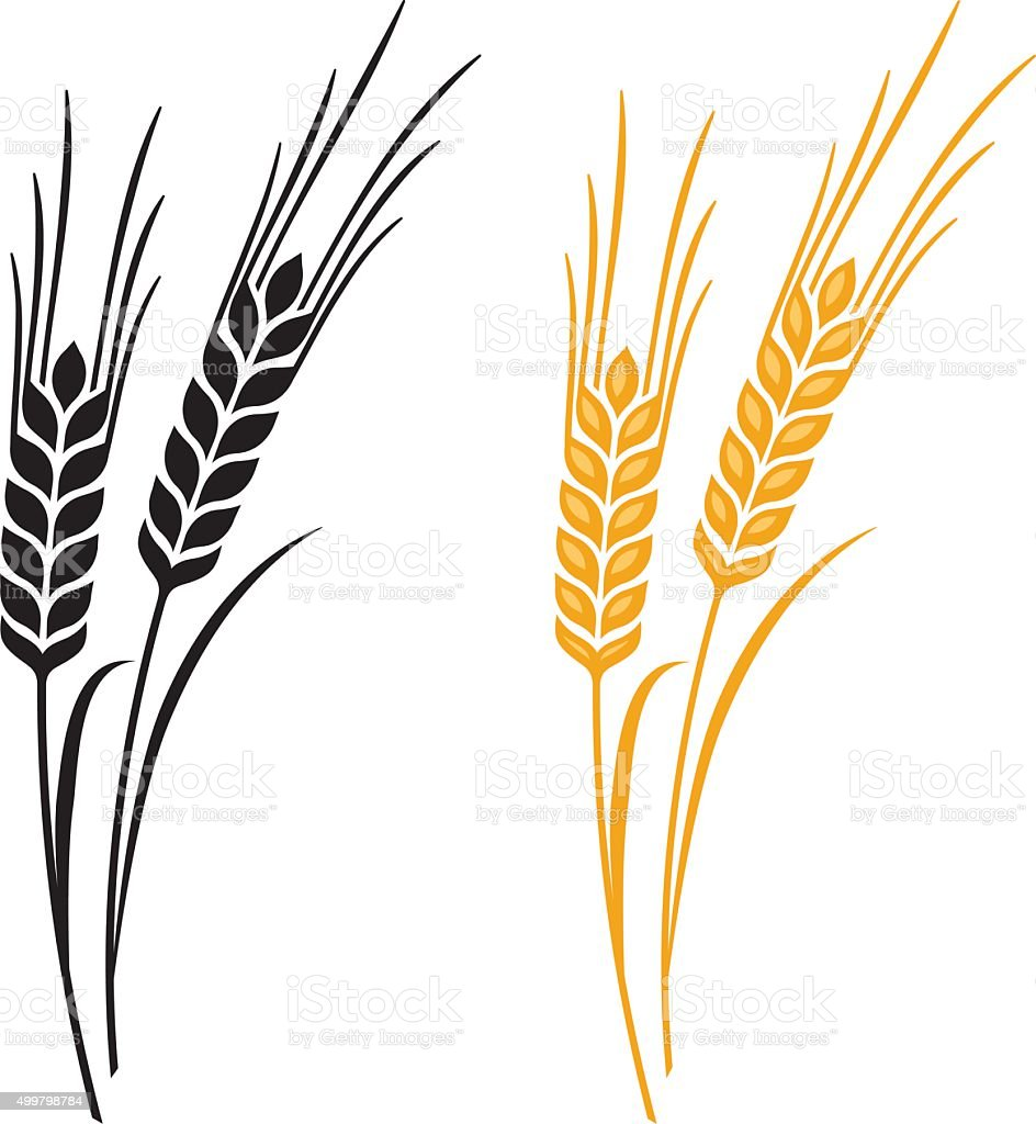 ears of wheat barley or rye stock vector art more images of 2015 rh istockphoto com barley vector eps barley vector free