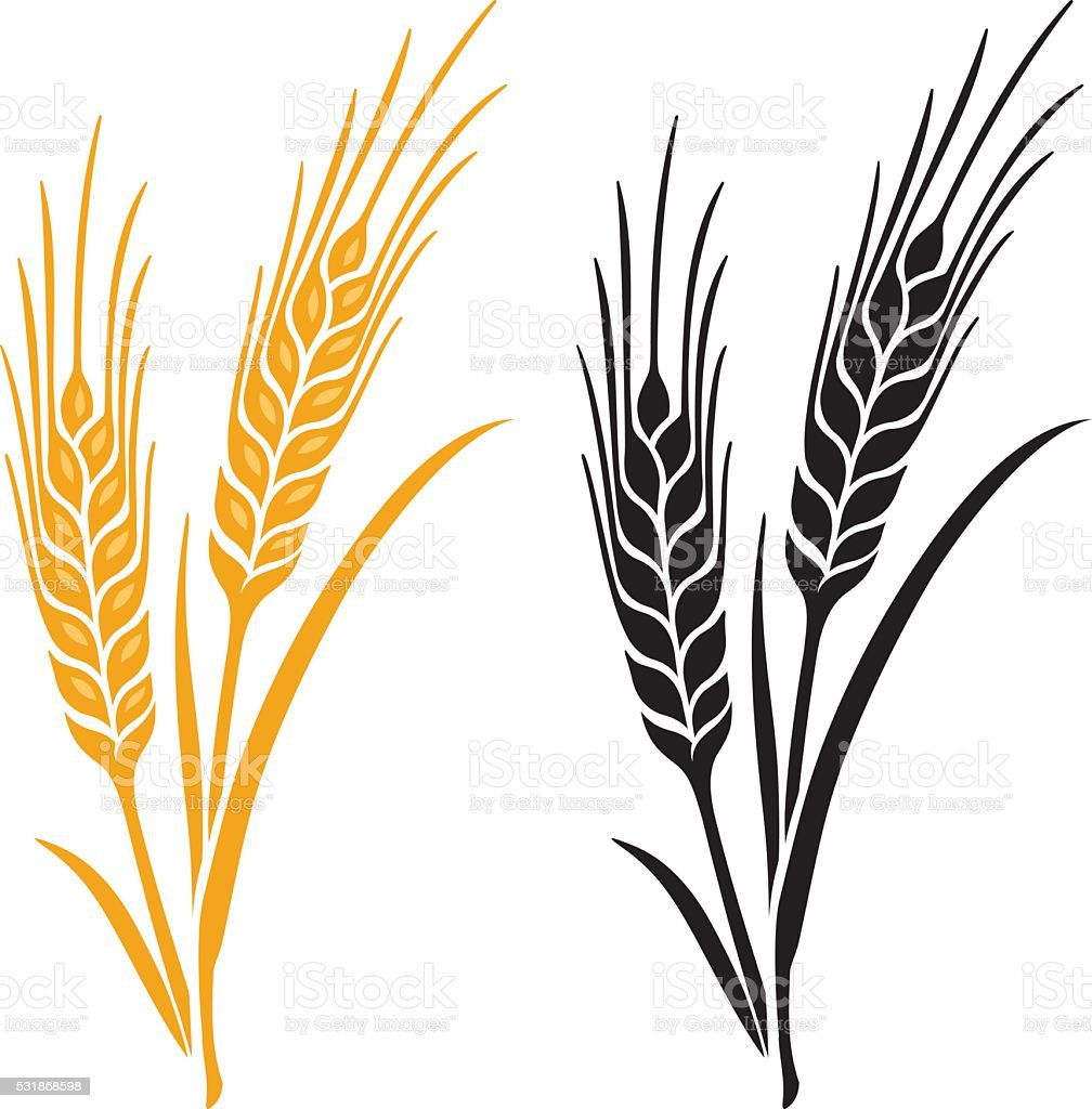 Ears of Wheat, Barley or Rye vector art illustration