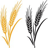 Ears of Wheat, Barley or Rye