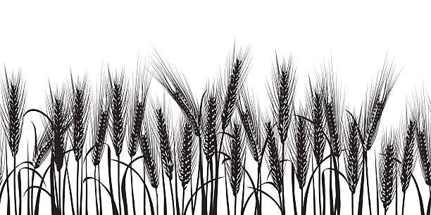 ears of wheat black horizontal seamless pattern - corn field stock illustrations, clip art, cartoons, & icons