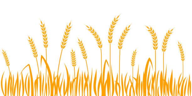 stockillustraties, clipart, cartoons en iconen met oren van tarwe horizontale rand naadloze patroon - wheat field