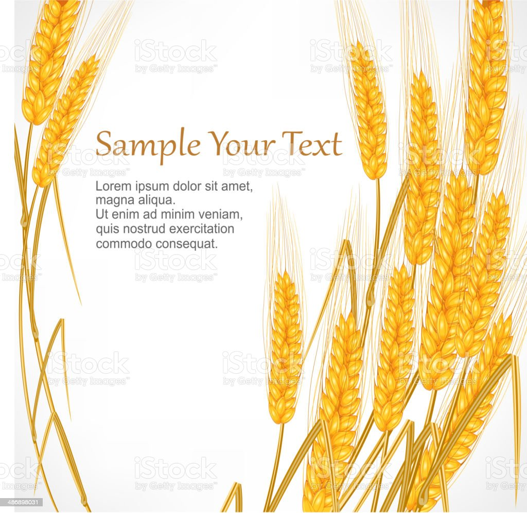 Ears of wheat on white royalty-free ears of wheat on white stock vector art & more images of agriculture