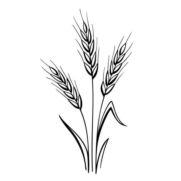 illustrations, cliparts, dessins animés et icônes de oreilles de blé - blé