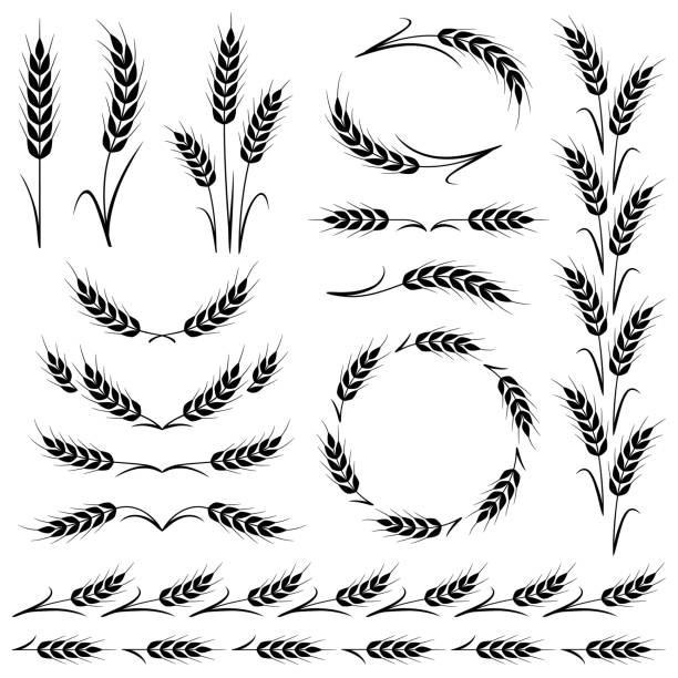 Ears of wheat Stylized ears of wheat. Border frames, dividing lines and different shapes. Vector design elements isolated on a white background. wheat stock illustrations