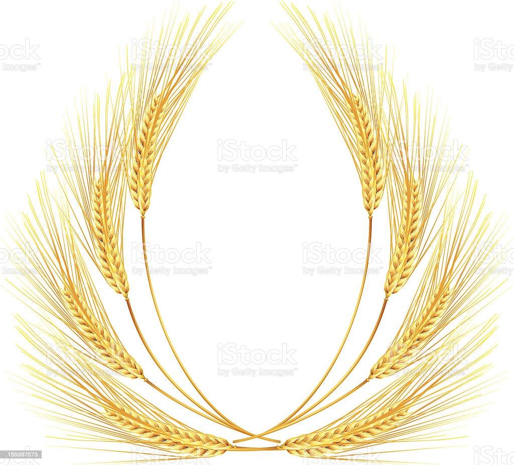 Ears of wheat royalty-free stock vector art