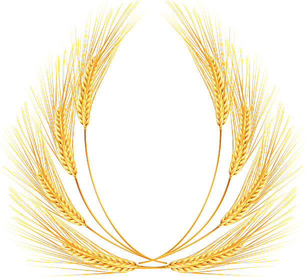 Bundle Of Wheat Clip Art, Vector Images & Illustrations ...