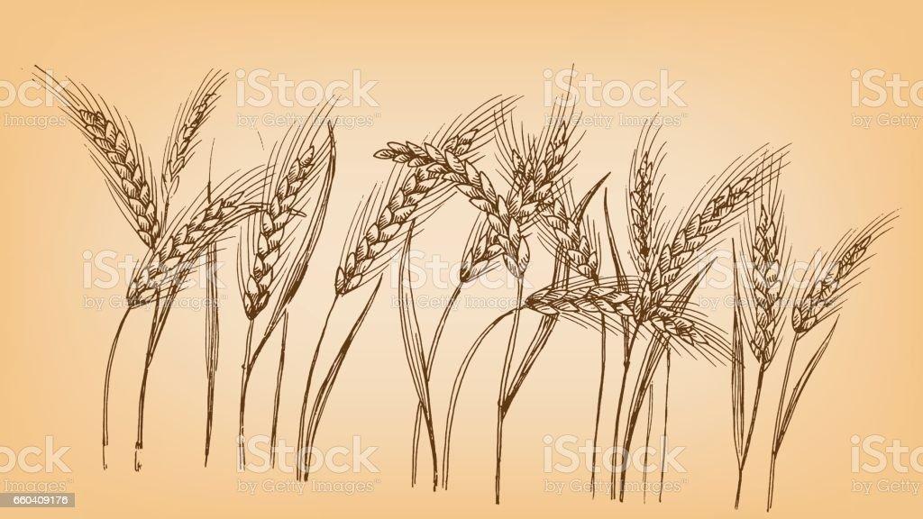 Ears of wheat vector art illustration