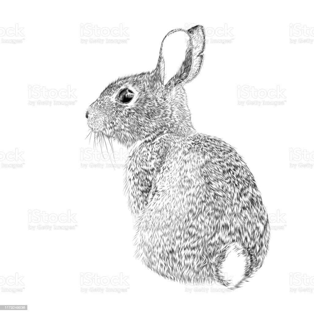 Osterhase Vektor Tinte Zeichnung - Lizenzfrei Auge Vektorgrafik