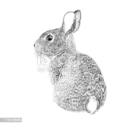 istock Easter Bunny Vector Ink Drawing 1173249536