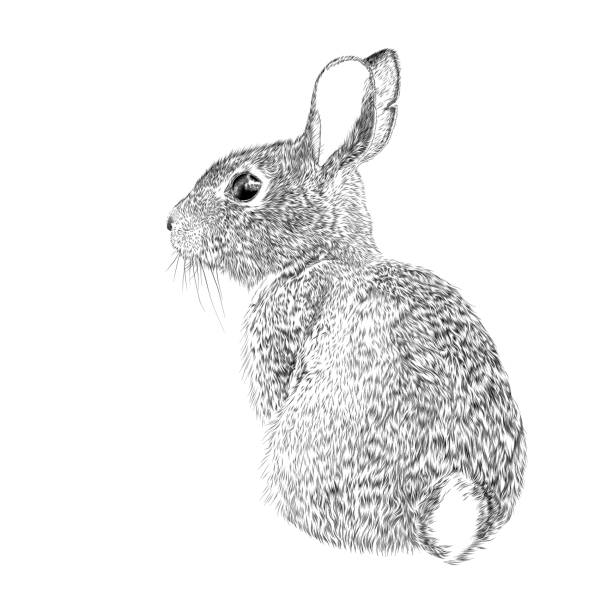 Easter Bunny Vector Ink Drawing Easter Bunny Vector Ink Drawing rabbit animal stock illustrations