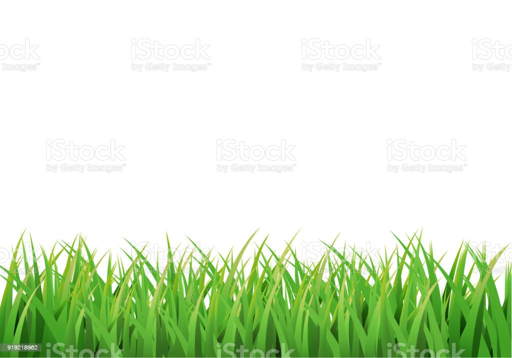 Easter grass border. Vector design isolated on white vector art illustration