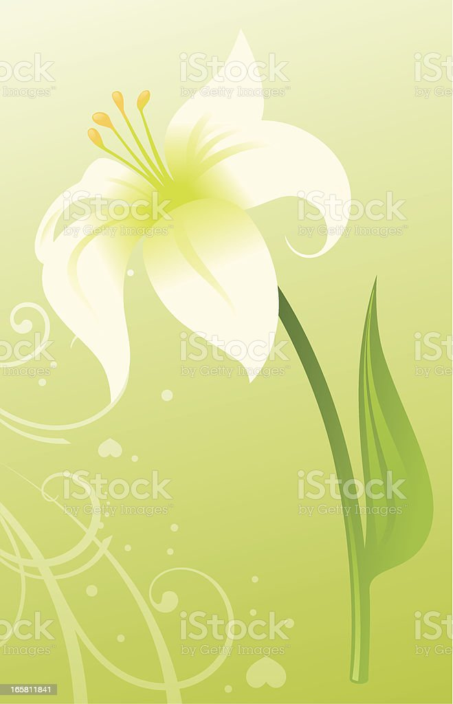 Easter Lily royalty-free easter lily stock vector art & more images of celebration event
