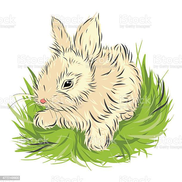 Easter rabbit sitting in green grass isolated on white vector id472249900?b=1&k=6&m=472249900&s=612x612&h=71kw3m0pctejzkhwpekqzsxchhrr9xtdu3txy6bxrcc=