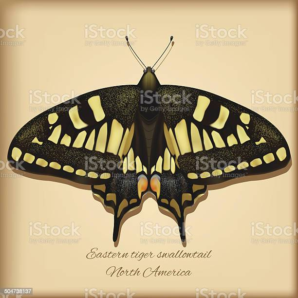 Eastern tiger swallowtail vector illustration vector id504738137?b=1&k=6&m=504738137&s=612x612&h=cudiqushc1f3t8yaatc96zeamg m4vd7 otq9id7nrm=