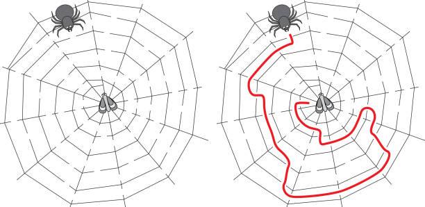 Labirinto de aranha fácil - ilustração de arte em vetor