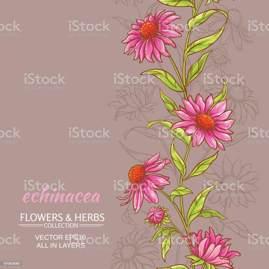 echinace purpurea vector background vector art illustration