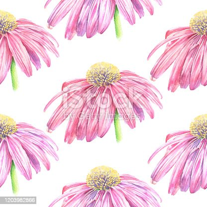 Echinacea Flower Seamless Pattern Vector Watercolor Iillustration