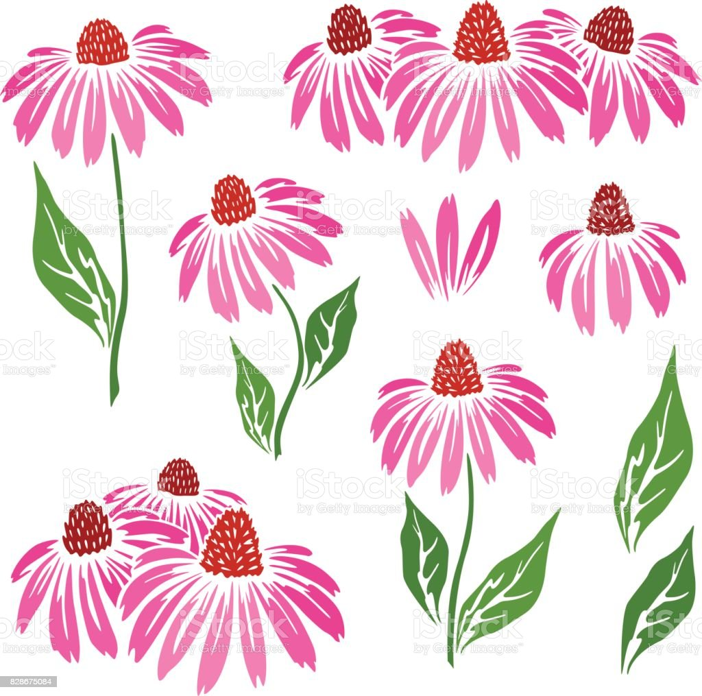 Echinacea flowers icons collection. vector art illustration