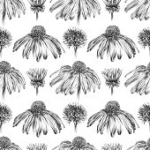 Echinacea Flowers Pen and Ink Vector Iillustration Seamless Pattern