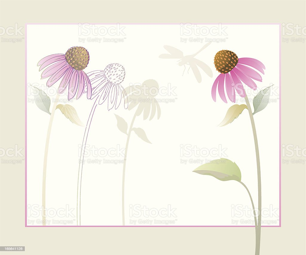 Echinacea Purple Coneflowers Watercolor Background With Dragonfly vector art illustration