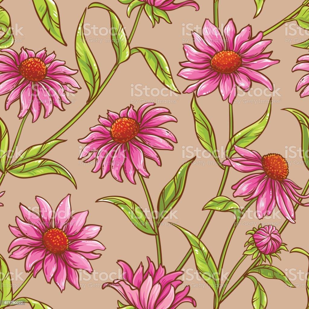 echinacea purpurea pattern vector art illustration