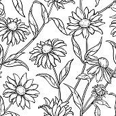 echinacea plant vseamless pattern on white background