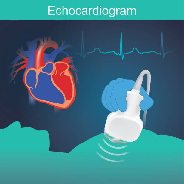 Echocardiogram vector art illustration