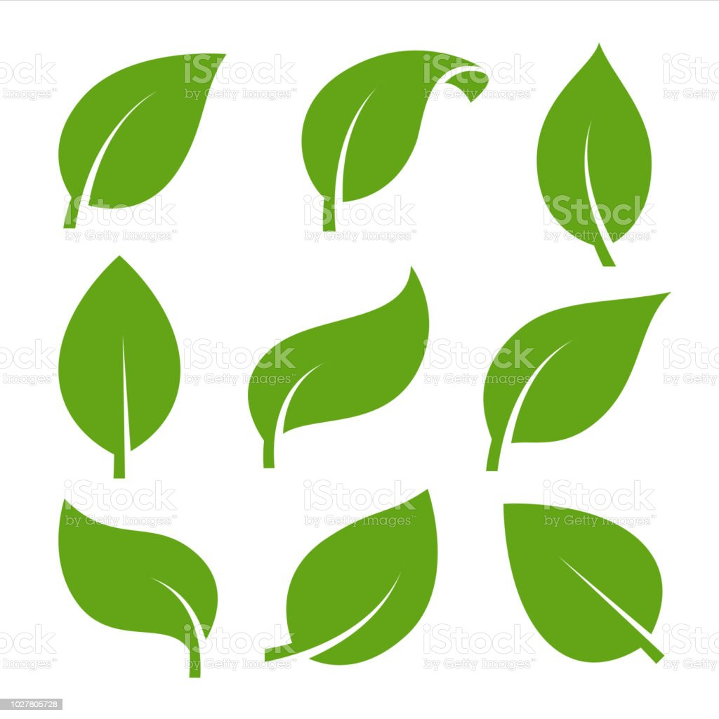 eco green color leaf vector logo flat icon set stock vector art rh istockphoto com banana leaf vector art coconut leaf vector art