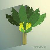 Ecological Concept, A Beautiful Tropical Banana Tree with Bananas