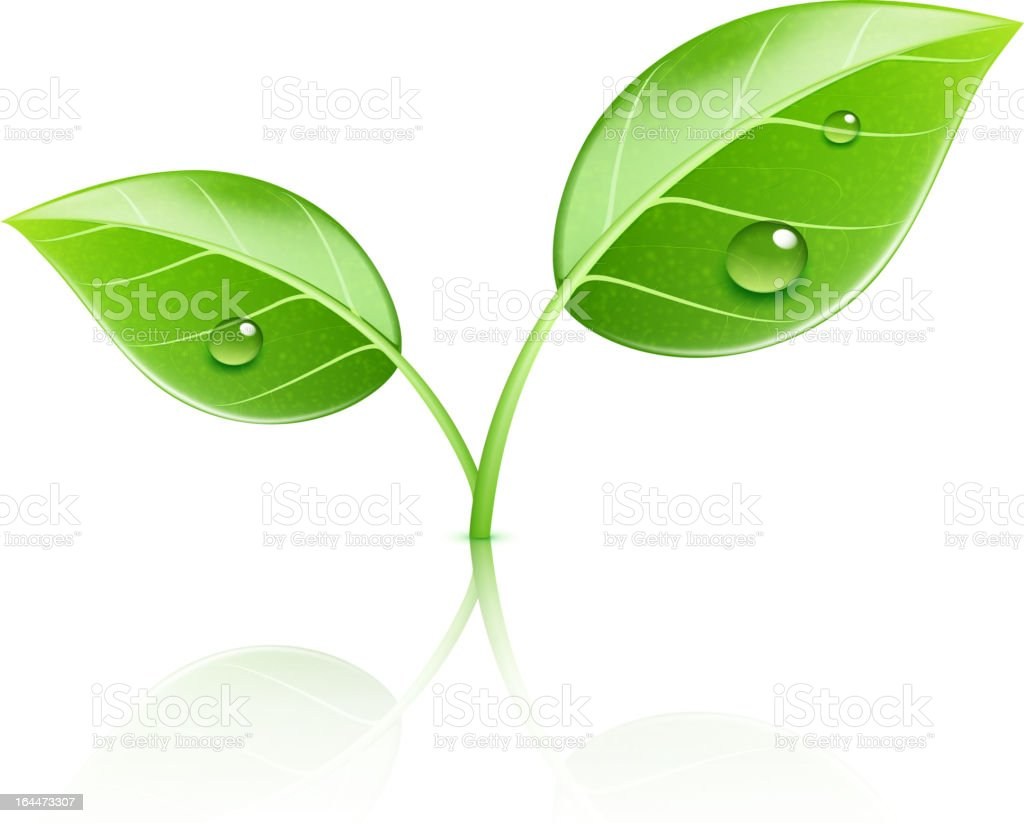 Ecology concept illustration of two leaves sprouting royalty-free stock vector art