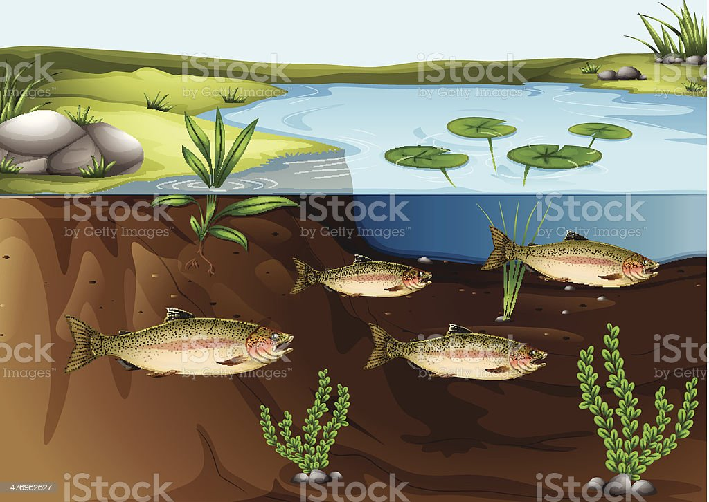ecosystem under the pond vector art illustration