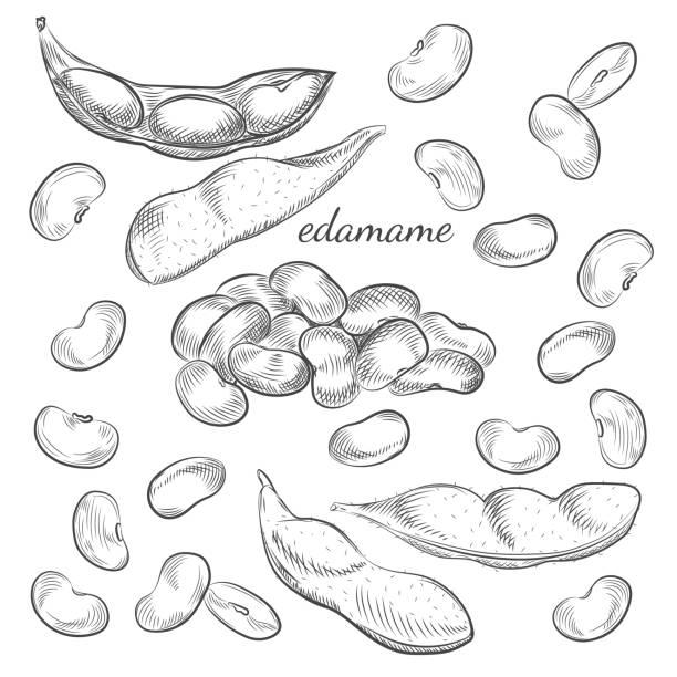 枝豆、白い背景で隔離のポッド。 - 枝豆点のイラスト素材/クリップアート素材/マンガ素材/アイコン素材