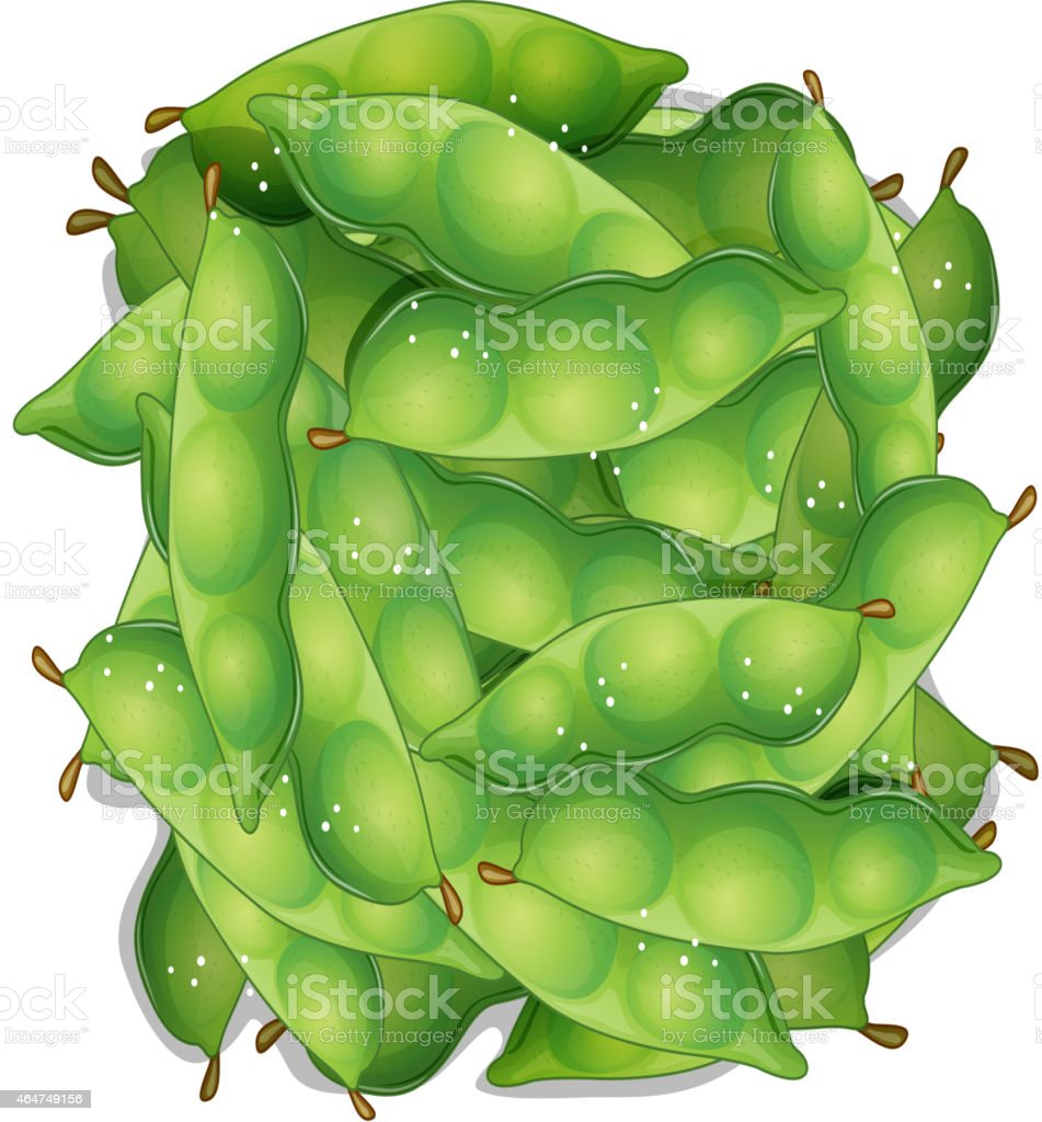Edamame vector art illustration