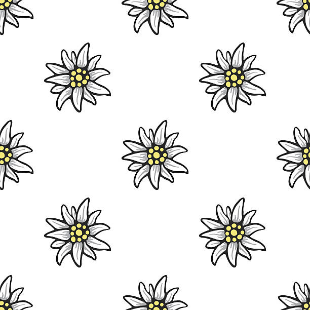 Edelweiss flower seamless pattern background texture vector art illustration