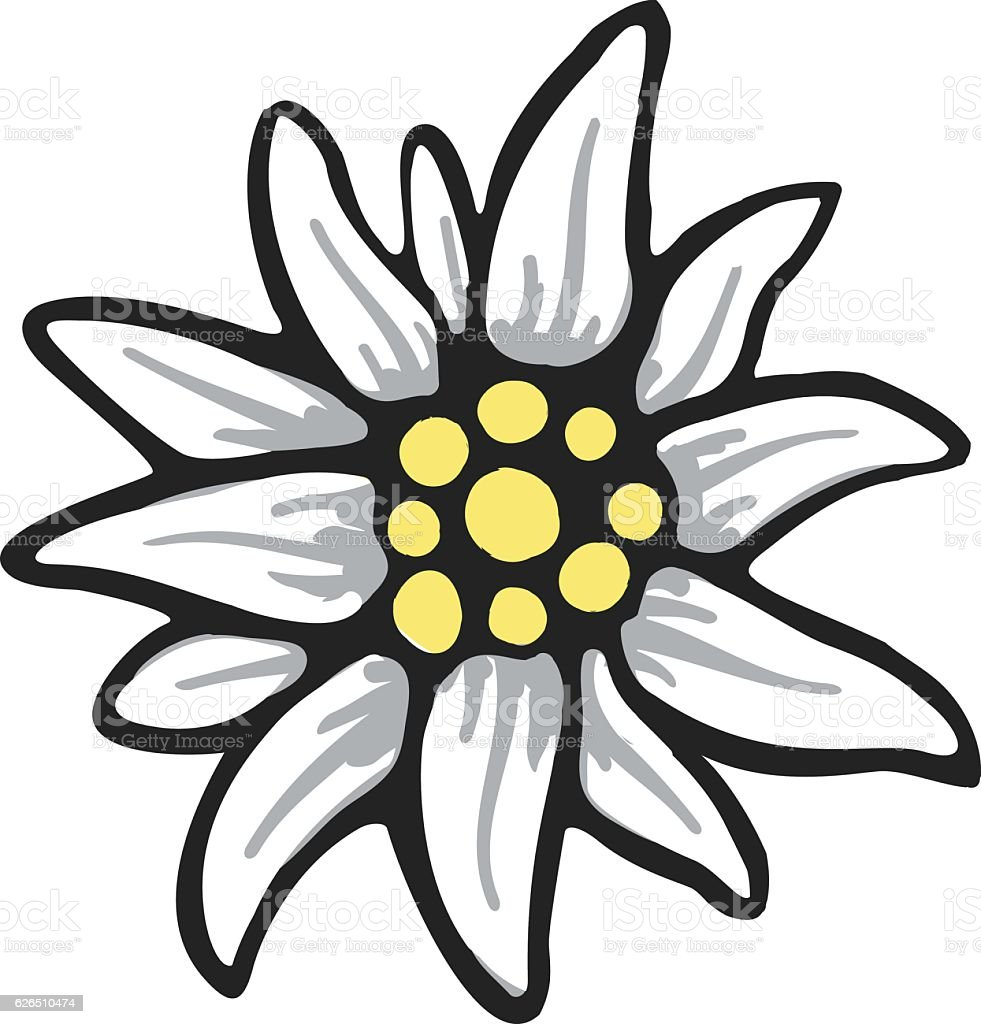 edelweiss flower symbol alpinism alps germany logo vector art illustration
